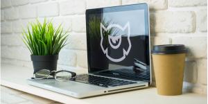 Web domains, hosting, and website design